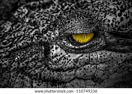 Alligator eye look stock photos royalty free images - Scary yellow eyes ...
