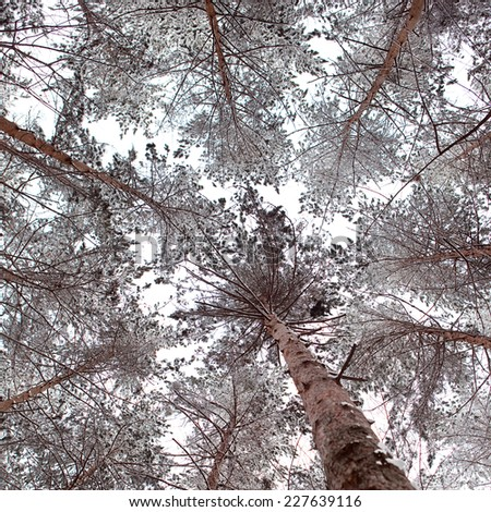 Scene in the cold winter forest. - stock photo