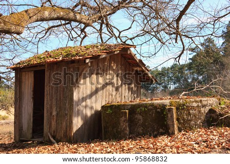 scene of small wood abandoned house on forest