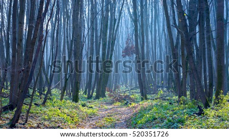 Scene with blue mist in autumn leafless forest