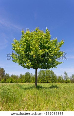 Scene with green tree on meadow - stock photo