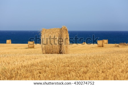 Scene with harvested agricultural field near sea
