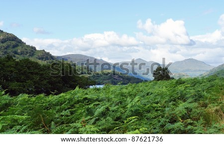 scenery in Scotland around Loch Lomond at summer time - stock photo