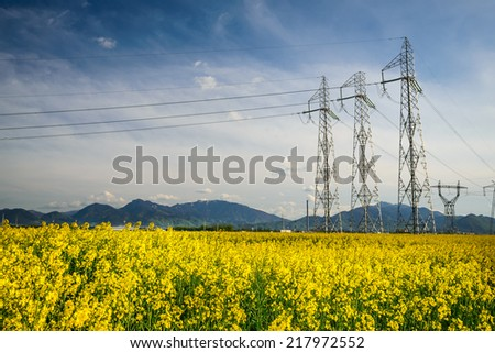 Scenery in Transylvania, Romania with colza field and powerline electritiy, Carpathian Mountains in background. - stock photo