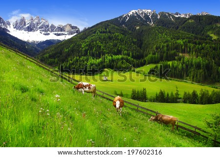 scenery of Dolomites - green grass pastures and cows - stock photo