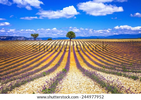 scenery of french Provence series - lavander fields - stock photo