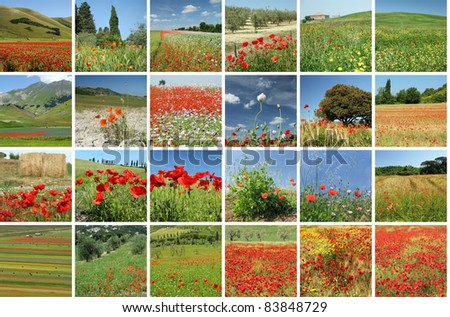 scenery with red poppies collage, Italy - stock photo