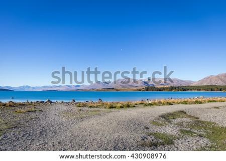 scenic at Lake Tekapo on clear sky day, New Zealand - stock photo