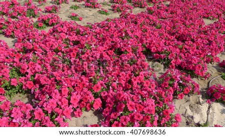 Scenic flowers in the desert - stock photo