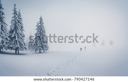 Scenic image of fairy-tale woodland. Frosty day on ski resort. Location Carpathian national park, Ukraine, Europe. Picture of great moment. Concept of active tourism. Discover the beauty of earth.