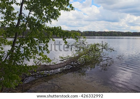 Scenic lake and forest. Tree fell in the lake. (Pisochne ozero, Ukraine). - stock photo