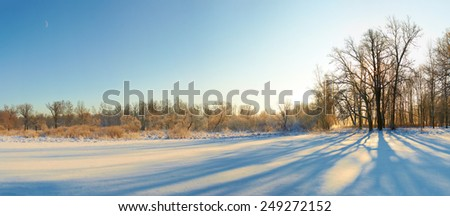 scenic landscape of bare trees and its shadows near  snow field in sunny winter day with clear sky - stock photo