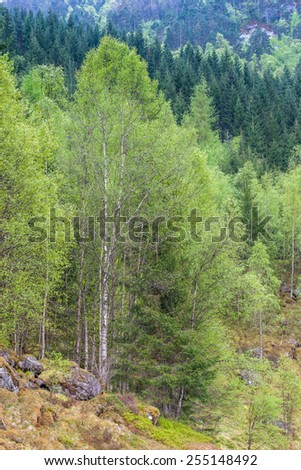 scenic landscapes of the northern Norwegian fjords in  spring . - stock photo