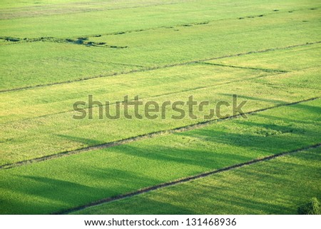scenic paddy field from bird's eye view.