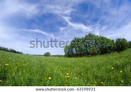 Scenic picture of a meadow full of dandelions - stock photo