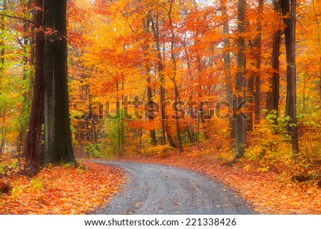 Scenic road through bright autumn trees - stock photo