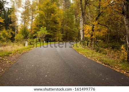 Scenic shot of country road along trees in the lush forest
