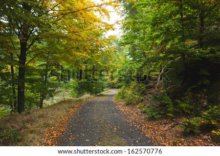 Scenic shot of narrow road along trees in the lush forest - stock photo