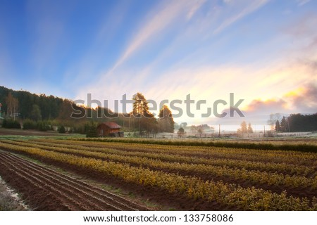 scenic spring HDR sunset landscape over the cultivated farmland - stock photo