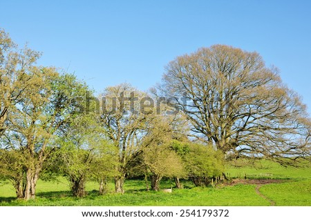 Scenic Springtime View of Trees Standing in a Green Field with a Beautiful Blue Sky Above - stock photo