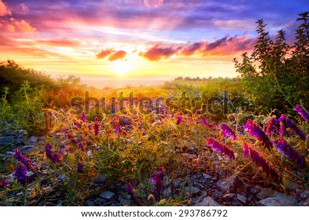 Scenic sunset landscape with mixed vegetation in the warm sunlight and the colorful sky in the background - stock photo