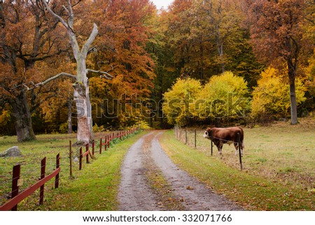 Scenic view of a country road in autumn with cow - stock photo