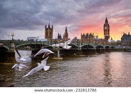 Scenic view of Big Ben with the Westminster Abbey and flying seagulls on sunset - stock photo