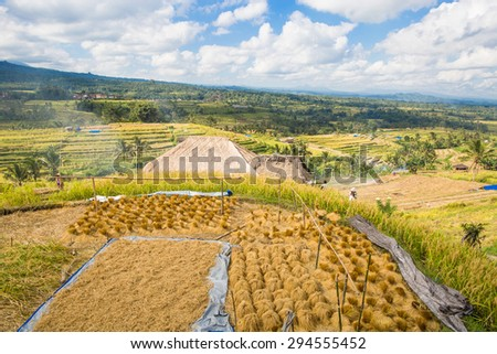 Scenic view of Jatiluwih rice terrace in Bali, Indonesia - stock photo