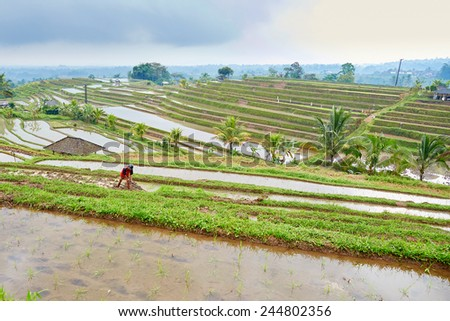 Scenic view of Jatiluwih rice terrace on a rainy day - stock photo