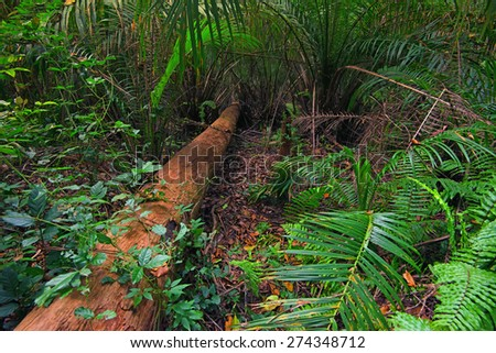 Scenic view of lush foliage of African tropical forest - stock photo