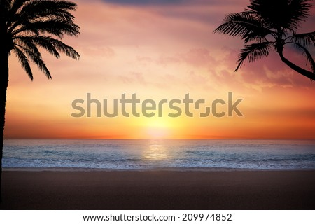 Scenic view of palm trees and beach at sunset - stock photo