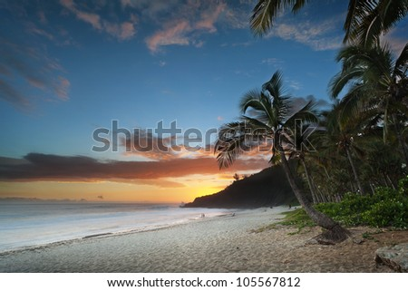 Scenic view of palm trees on Grande Anse beach at sunset. - stock photo