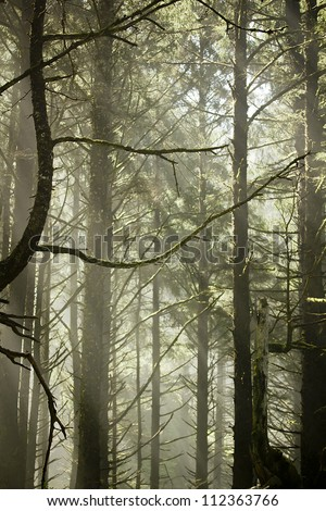 Scenic view of rays of sun beaming through the trees. - stock photo
