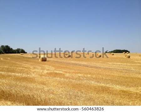 scenic view of summer hay field with rolls