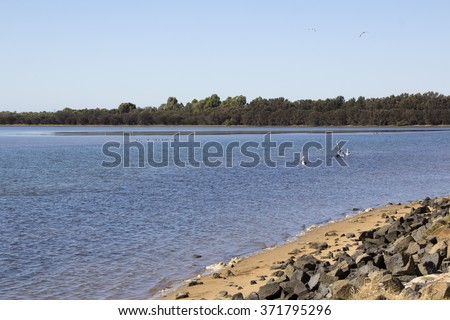 Scenic view of the Leschenault Estuary  at the Cut near Australind , South Western Australia on a fine sunny morning in late summer is calm and peaceful. - stock photo
