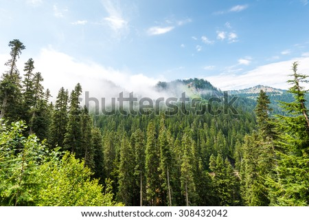 scenic view on pavement on the way to  Mount Rainier,WA,USA - stock photo