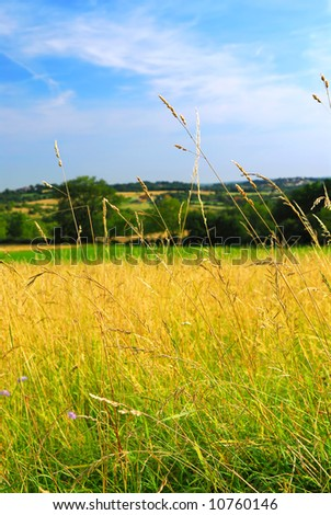 Scenic view on summer agricultural landscape in rural France, closeup on grass