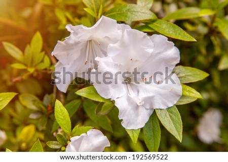 Scenic watercolor background, floral composition with white flowers - stock photo