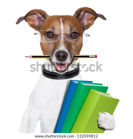 school dog with books and a pencil - stock photo