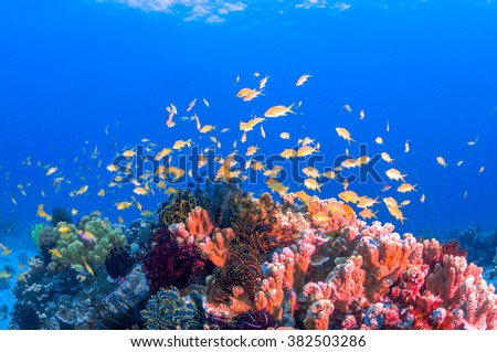 School of colorful fish on coral reef in ocean - stock photo
