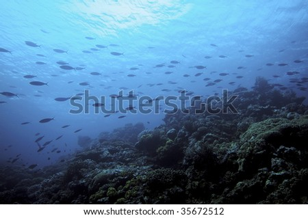 school of fish in the pacific - stock photo