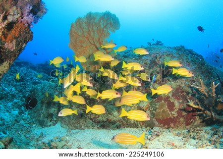 School of fish on coral reef in ocean