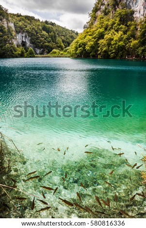 Fish Swim Clear Turquoise Water Shore Stock Photo 577362613 Shutterstock