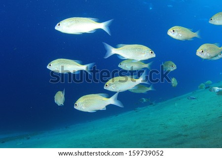 School of fish underwater - stock photo
