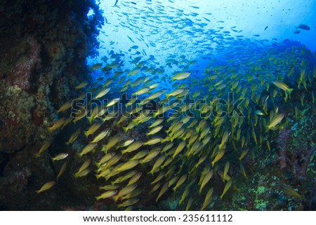 School of Fish underwater on coral reef - stock photo