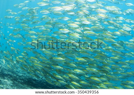 School of fish underwater, Tulamben, Bali, Indonesia.