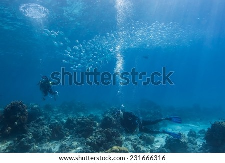 School of jack fish and diver pass through coral reef in Dimakya Island, Palawan.