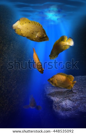 School of sea perch under ocean water and giant cod fish