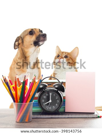 school supplies and pets - stock photo
