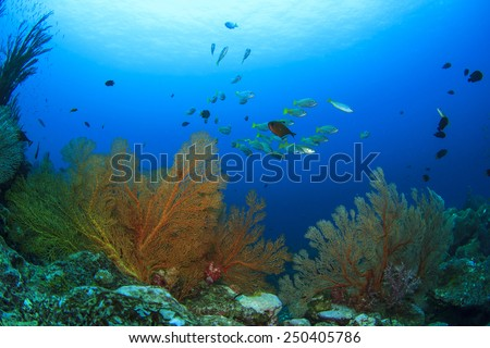 School yellow snappers fish and coral reef underwater